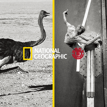 THE ELEMENT & NATIONAL GEOGRAPHIC COLLECTION